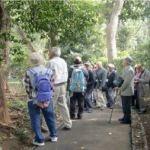 代々(ダイダイ)の木の下で、正月飾りの講釈中。