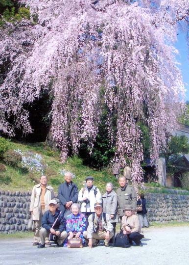 梅岩寺しだれ桜の下で