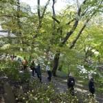 shizen50-1