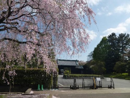 shizen50-9
