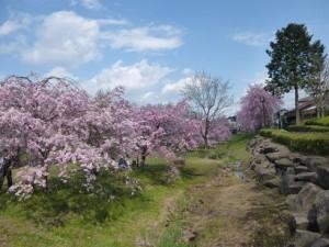 春爛漫の花の色