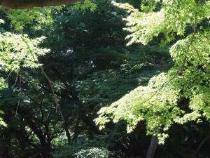 keiyoukai21