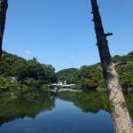 美しい薬師池の景観
